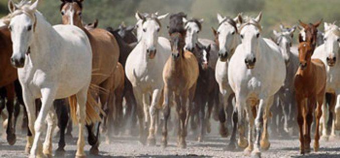 Omeprazol pode afectar absorção de cálcio nos cavalos