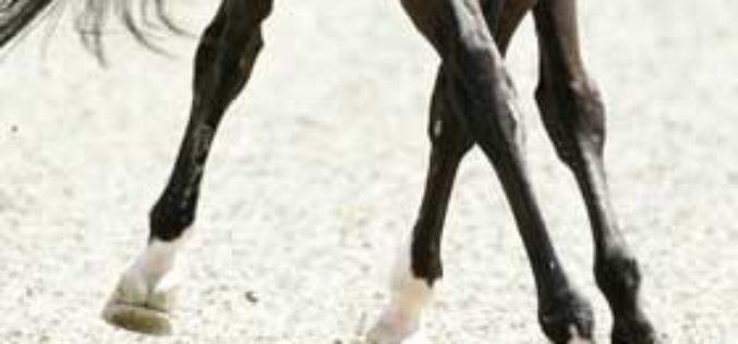 Rio 2016: Requisitos sanitários para cavalos