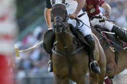 "Argentine Polo Horse Breeders Association Honors ""Chocolate"""