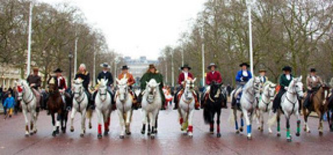 Iberian horses parading the streets of London on New Year's Day