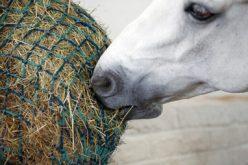 Fitatos um aliado na alimentação dos cavalos