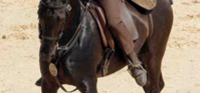XVIII Campeonato Nacional de Equitação de Trabalho – I Jornada