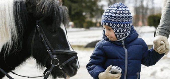 Cavalos conseguem distinguir expressões faciais negativas ou positivas dos humanos
