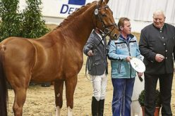 Four young stallions honoured