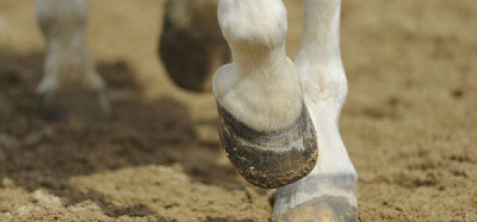 «EcoConforMat» minimiza o desconforto do seu cavalo