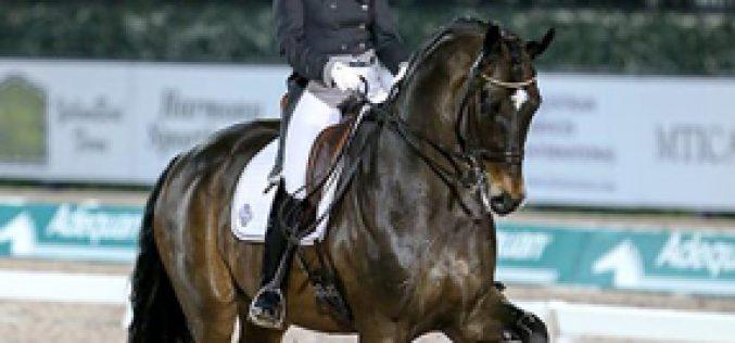 CDI-W Wellington: Tinne Vilhelmson-Silfven rides to Victory in FEI Grand Prix Freestyle