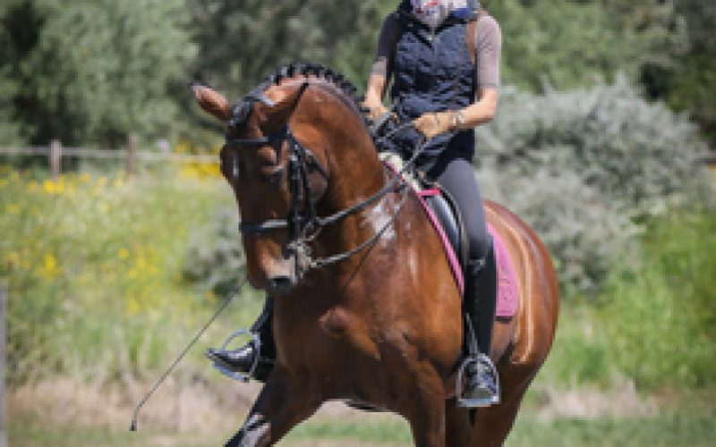Partnership between Alter Real Stud and Christine Jacoberger