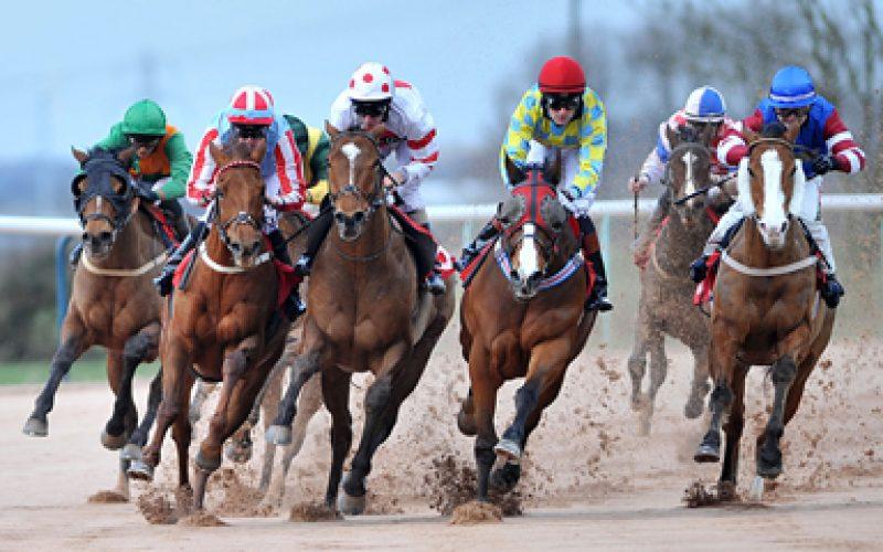 Apostas de cavalos podem movimentar mais de 300 milhões ao ano