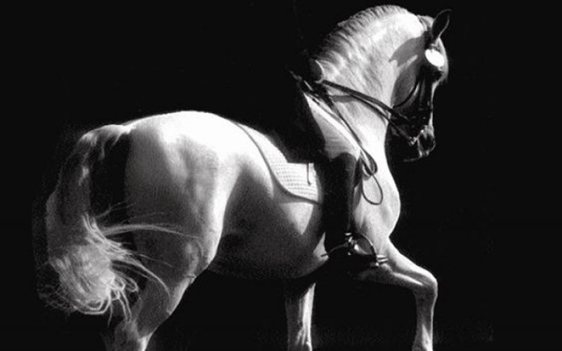 O Tacto Equestre