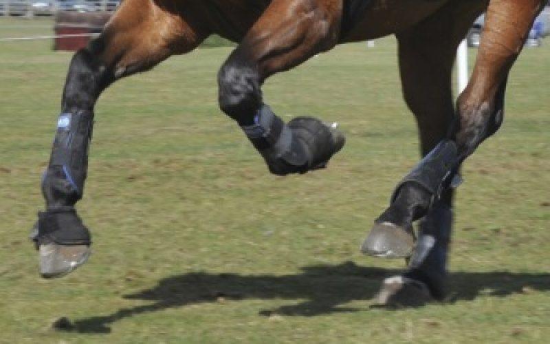 Sabe aplicar uma banda neuromuscular em equinos?