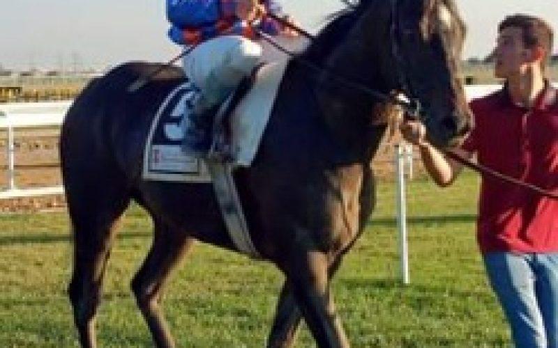 Diogo Teixeira inscrito com 3 cavalos em San Sebastian!