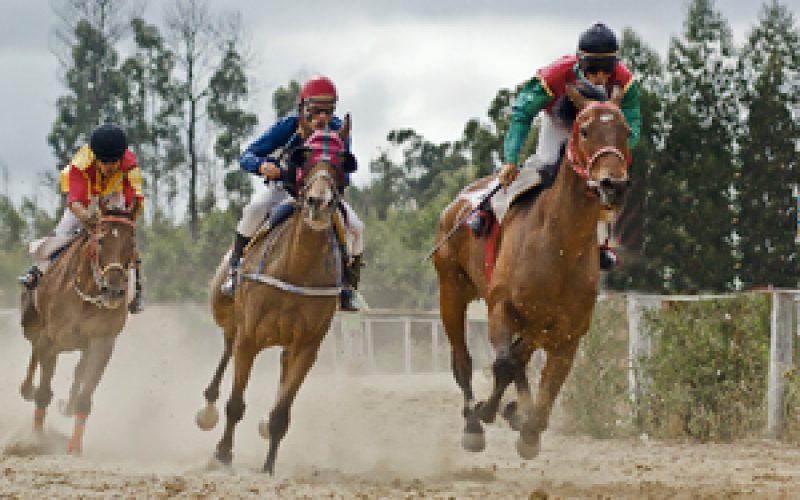 54 Equinos participam domingo no Hipódromo da Maia!