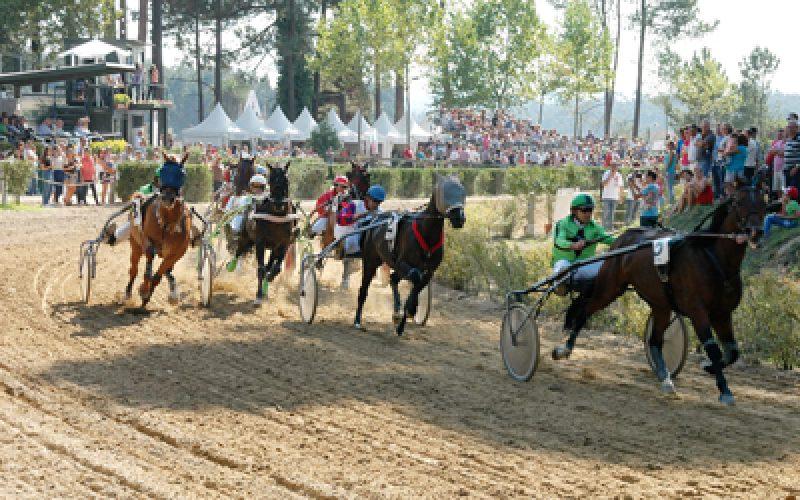 Resultados: 4ª Jornada do Campeonato Nacional de Cavalos de Corridas