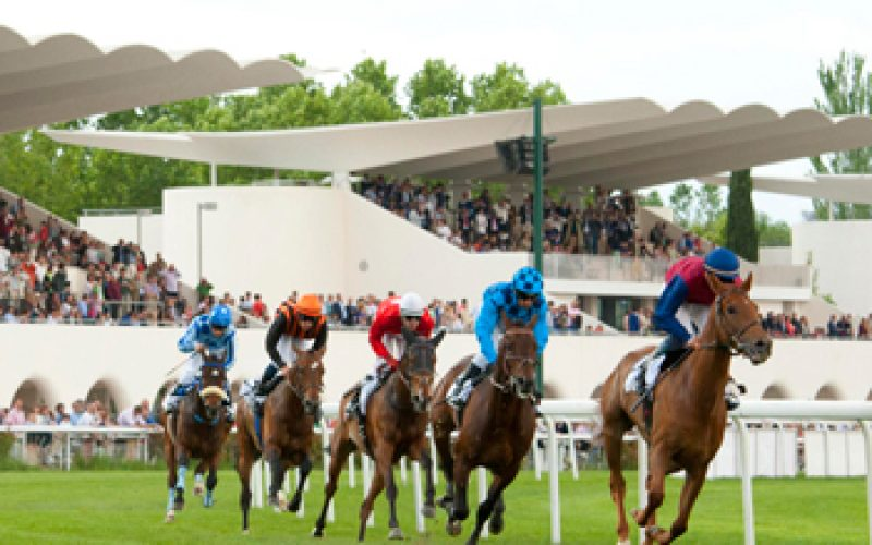 2 Equinos nascidos e criados em Portugal debutam domingo em Madrid!