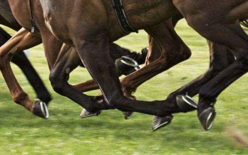 Curso de Vetkin Tape em cavalos