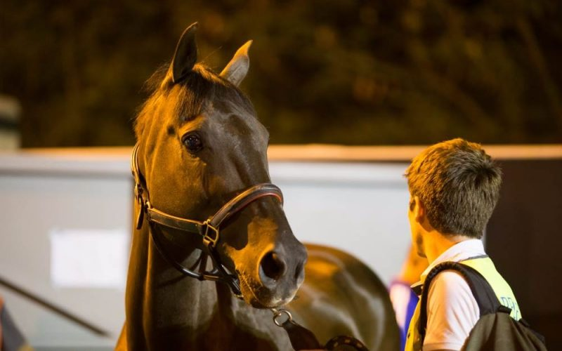 Touchdown! First Olympic horses arrive in Rio de Janeiro!