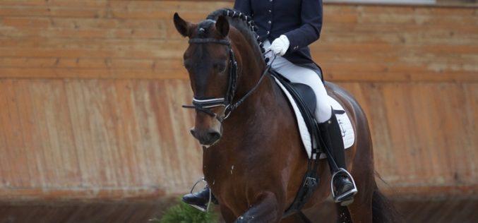 111 Cavalos inscritos no Campeonato do Mundo de Cavalos Novos de Dessage