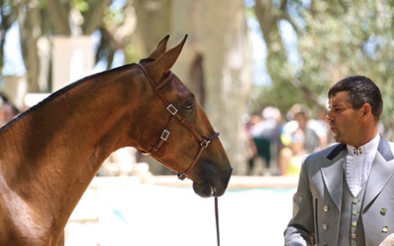 "Beaucaire 2016: ""Loki de La Gesse"" Campeão dos Campeões"