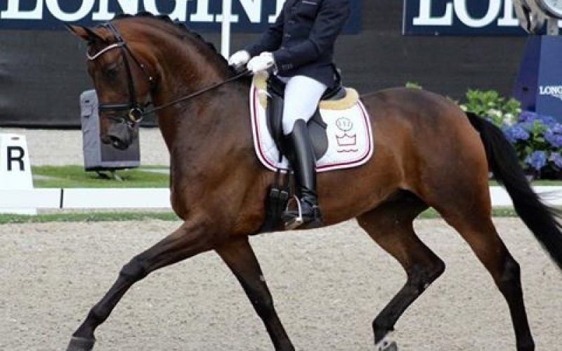 World Breeding Dressage Championships: Severo Jurado and Fiontini on top