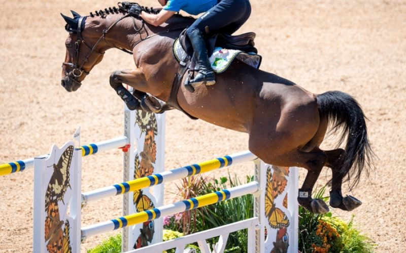 Rio 2016: Mais 2 cavaleiros desclassificados nos Jogos Olímpicos
