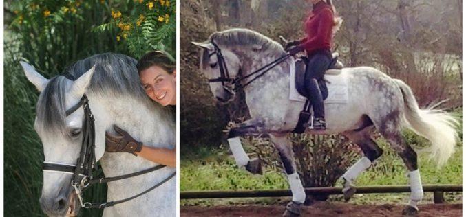 Rio 2016: Sabia que o lusitano «Vendaval 4» convocado para os J.O. foi treinado por Coralie Baldrey?