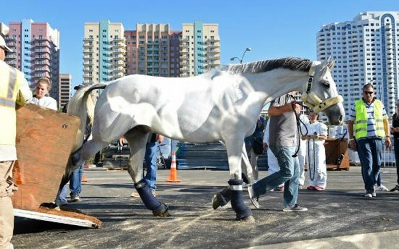 Longines Masters of Los Angeles : horses get settled at Long Beach
