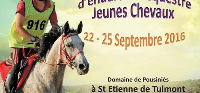 Portugueses inscritos no Campeonato do Mundo de Cavalos de 7 anos – Raides, CEIO2* e CEI2* em NEGREPELISSE (França)