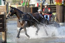 FEI European Championships for Young Drivers: Young Driving Talents perform at top level