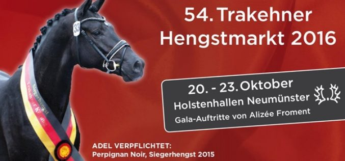 Trakehner Stallion Market – the market place for exquisite quality