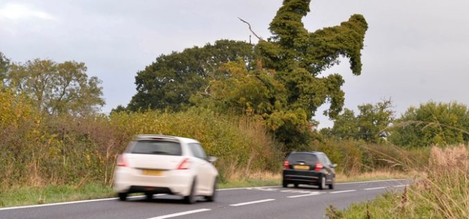 Insólito: Árvore com formato de jóquei em cima de um cavalo chama atenção de condutores – Inglaterra