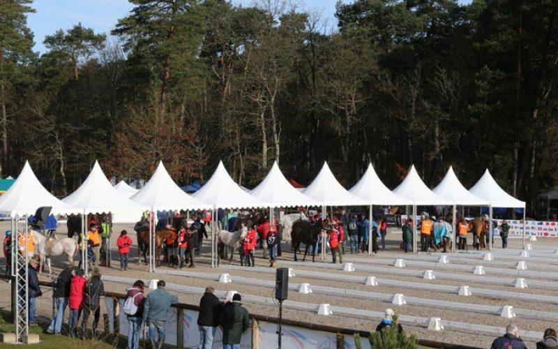 CEI1* Fontainebleau: Dois cavalos de endurance sacrificados