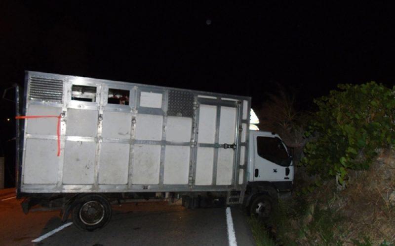 Cavalos feridos em despiste de camião