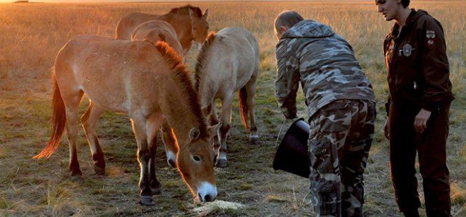 Putin liberta cavalos selvagens (VÍDEO)