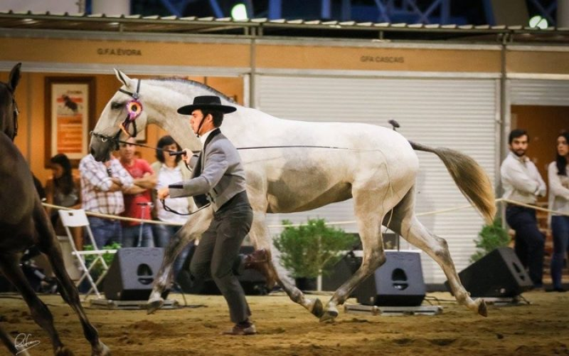 RuralBeja 2016: «Jóia MT» Campeã Fêmea e Campeão de Campeões