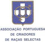 Cruzado-Português