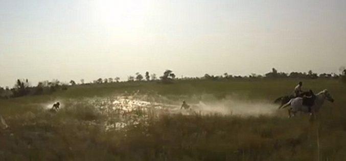África do Sul: Leoa persegue turistas a cavalo (VÍDEO)