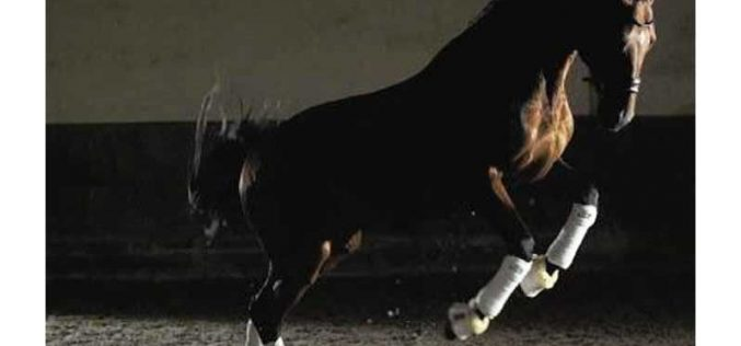 Gonçalo Carvalho reforça a sua quadra de cavalos para 2017 (VÍDEO)