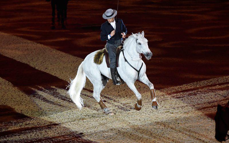 """""""O Orgulho de Portugal"""" brilha em Olympia: Carl Hester ganha o Grande Prémio"""