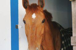 Provedora dos Animais quer centro equestre para animais abandonados