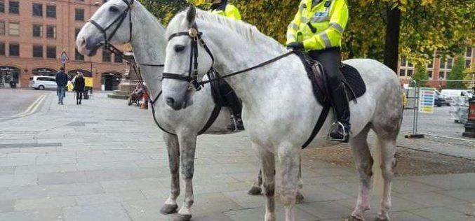Multado por arremessar hamburguer contra… cavalo da polícia