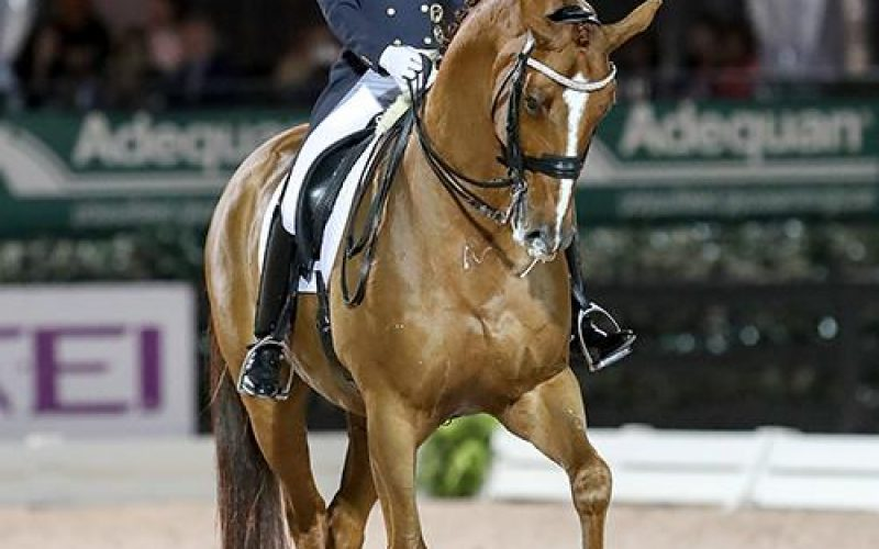 CDI-W Wellington: Lisa Wilcox and Galant win the Grand Prix Freestyle