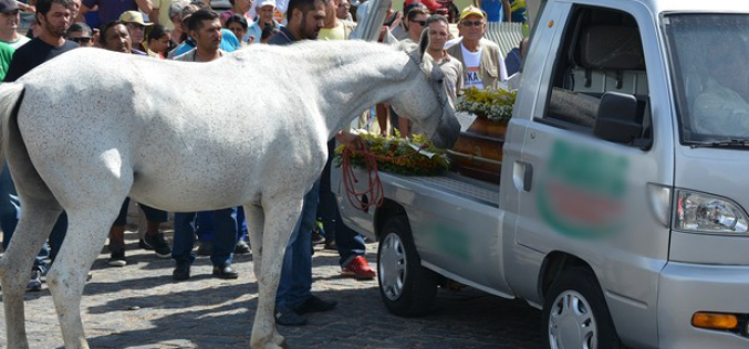 Cavalo comove multidão no funeral do dono (VÍDEO)