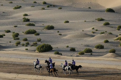 6 Horse Deaths In Dubai Endurance Events In the Last 3 Weeks