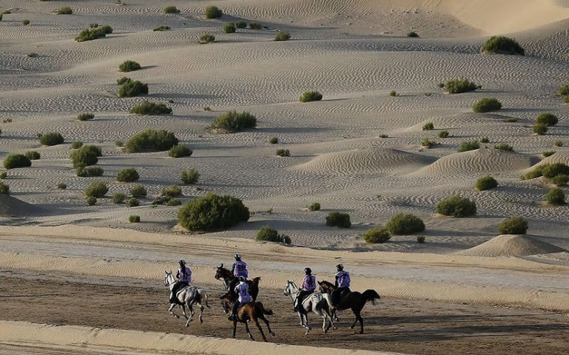 DUBAI – Janeiro de 2017 – morreram 6 cavalos em provas de Endurance