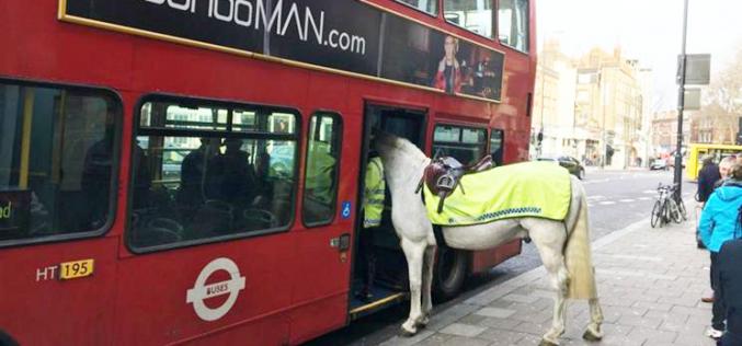 Cavalo entra em autocarro depois de passageiro se sentir mal