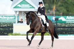 CDI-W Wellington: Suzan Pape and Harmony's Don Noblesse win the G.P. Special