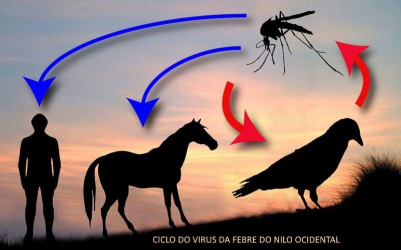 Vírus da Febre do Nilo Ocidental – Vacinar para prevenir!