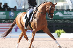 CDI4*- W: Wellington: Lisa Wilcox and Galant claim the Grand Prix
