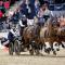 Boyd Exell cede cavalos para o Europeu de Atrelagem