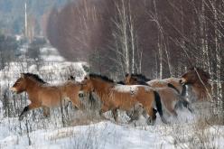 Nova teoria dá pistas sobre a evolução dos cavalos